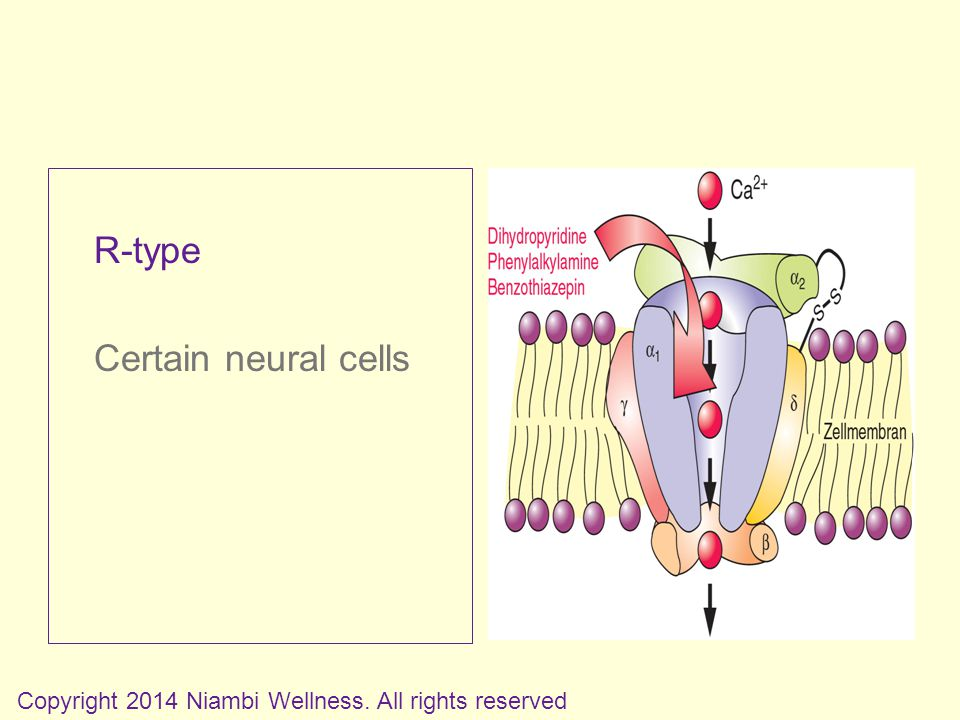 R-type Certain neural cells Copyright 2014 Niambi Wellness. All rights reserved