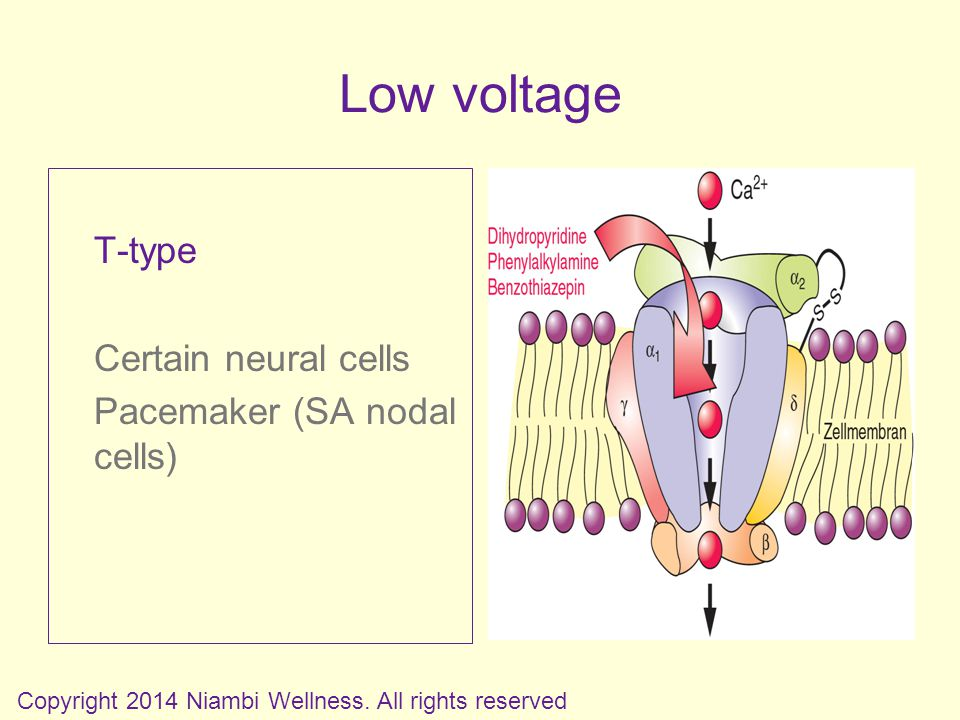 T-type Certain neural cells Pacemaker (SA nodal cells) Copyright 2014 Niambi Wellness.