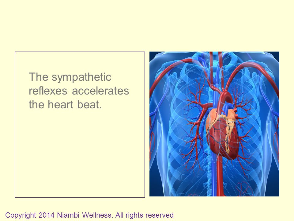 The sympathetic reflexes accelerates the heart beat.