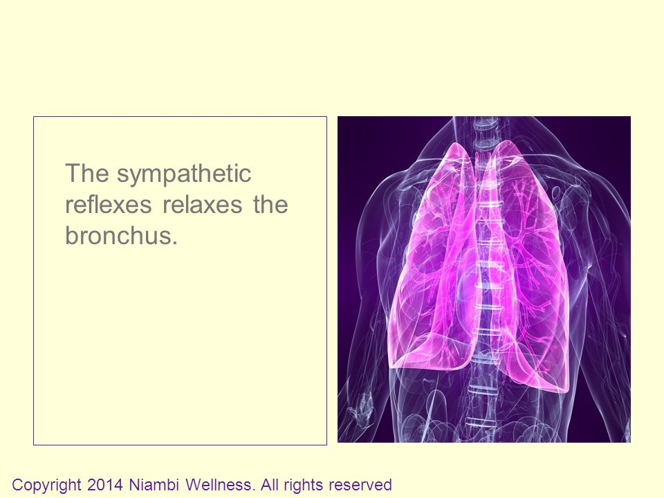 The sympathetic reflexes relaxes the bronchus. Copyright 2014 Niambi Wellness. All rights reserved