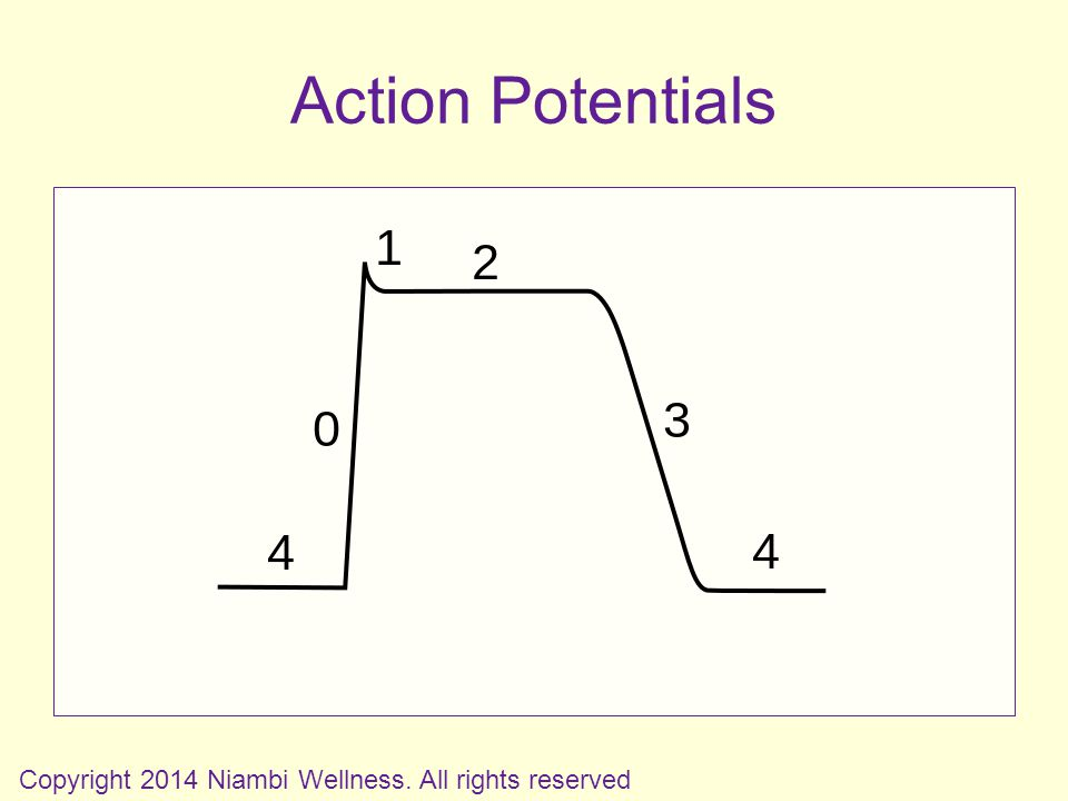 Action Potentials Copyright 2014 Niambi Wellness. All rights reserved