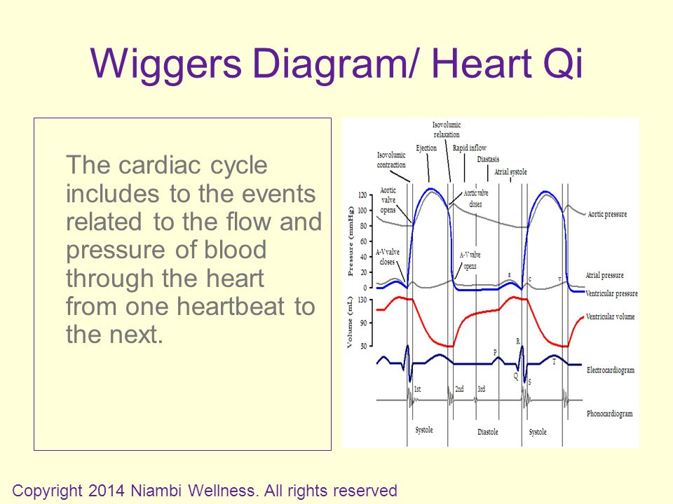 Wiggers Diagram/ Heart Qi The cardiac cycle includes to the events related to the flow and pressure of blood through the heart from one heartbeat to the next.