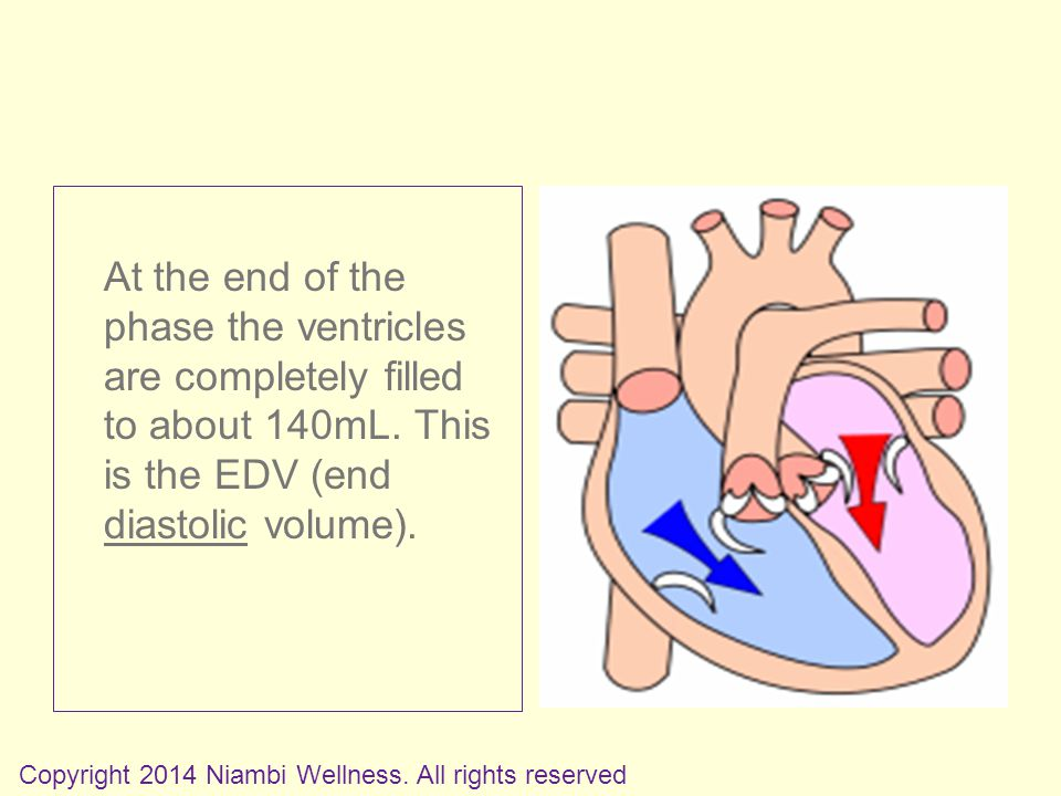 At the end of the phase the ventricles are completely filled to about 140mL.