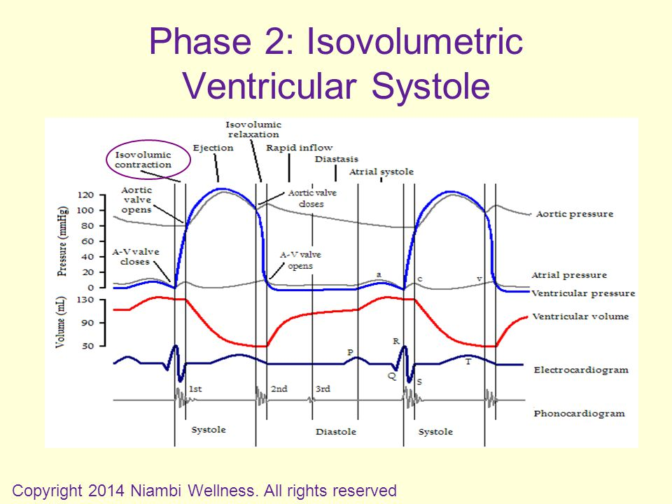 Phase 2: Isovolumetric Ventricular Systole Copyright 2014 Niambi Wellness. All rights reserved