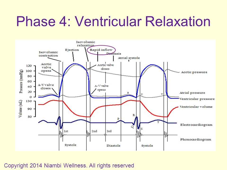 Phase 4: Ventricular Relaxation Copyright 2014 Niambi Wellness. All rights reserved