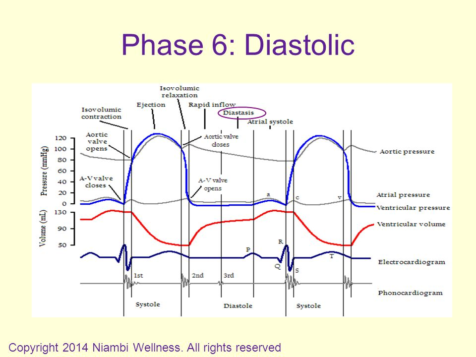 Phase 6: Diastolic Copyright 2014 Niambi Wellness. All rights reserved