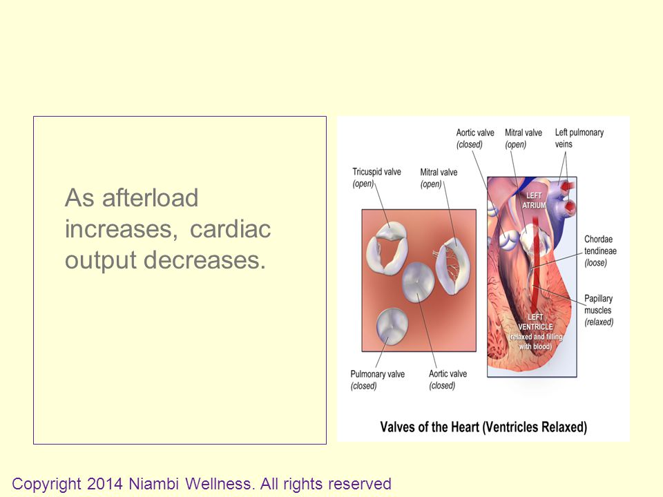As afterload increases, cardiac output decreases. Copyright 2014 Niambi Wellness.