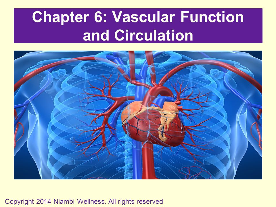 Chapter 6: Vascular Function and Circulation Copyright 2014 Niambi Wellness. All rights reserved