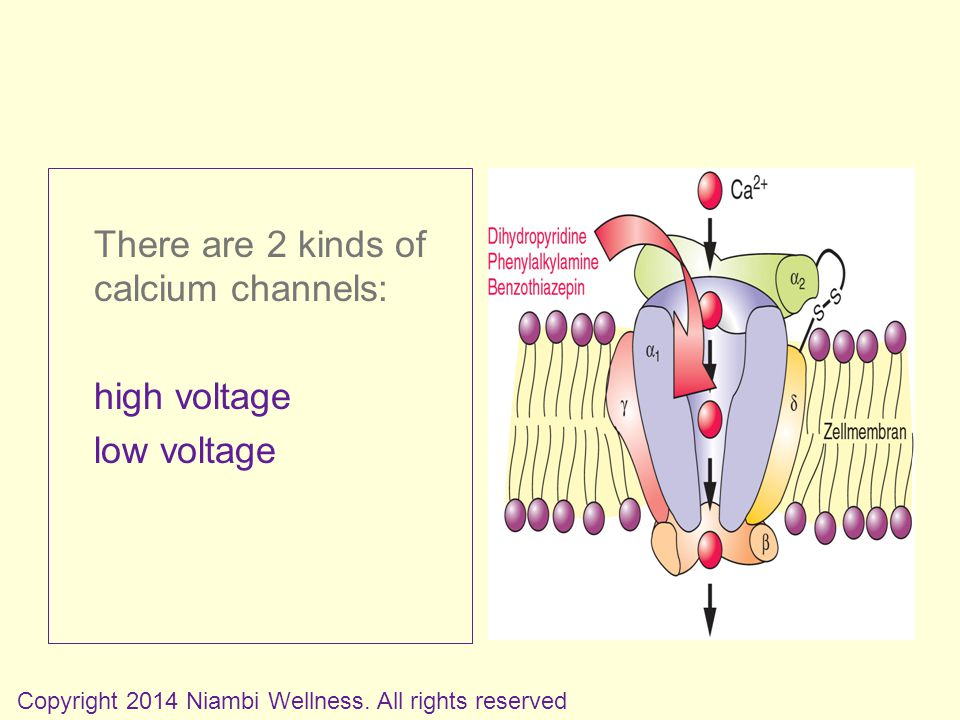 There are 2 kinds of calcium channels: high voltage low voltage Copyright 2014 Niambi Wellness.