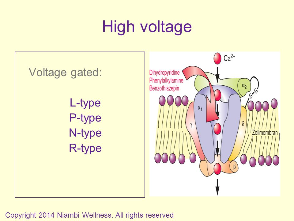 Voltage gated: L-type P-type N-type R-type Copyright 2014 Niambi Wellness.
