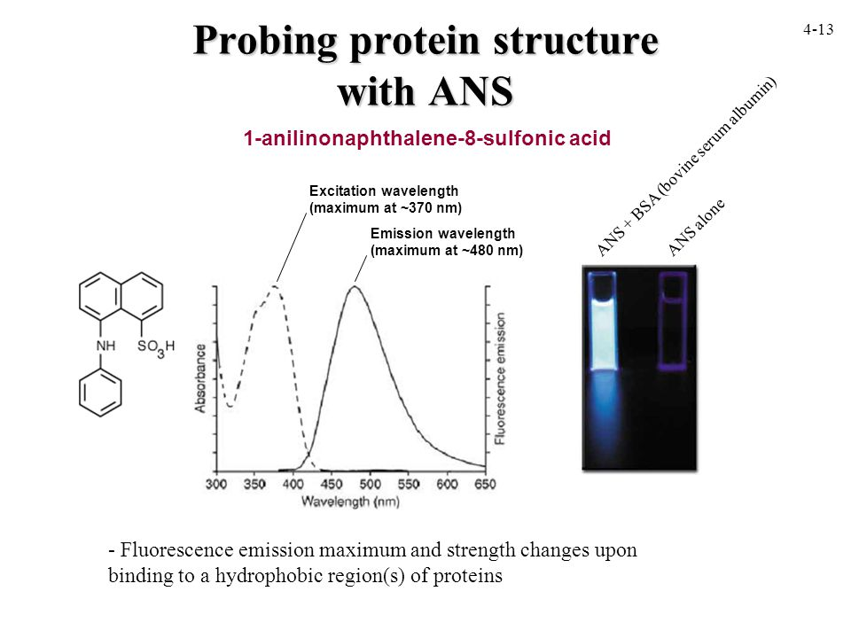 Probing protein structure with ANS 1-anilinonaphthalene-8-sulfonic acid - Fluorescence emission maximum and strength changes upon binding to a hydrophobic region(s) of proteins Excitation wavelength (maximum at ~370 nm) Emission wavelength (maximum at ~480 nm) ANS alone ANS + BSA (bovine serum albumin) 4-13