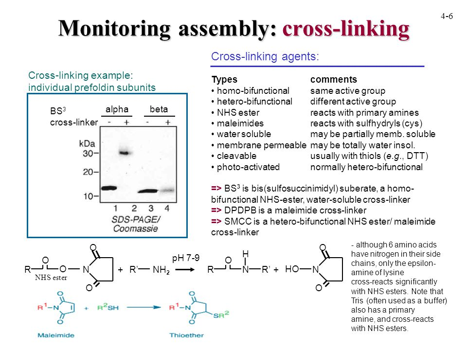 Monitoring assembly: cross-linking BS 3 cross-linker alphabeta Cross-linking example: individual prefoldin subunits Cross-linking agents: Typescomments homo-bifunctionalsame active group hetero-bifunctionaldifferent active group NHS esterreacts with primary amines maleimidesreacts with sulfhydryls (cys) water solublemay be partially memb.
