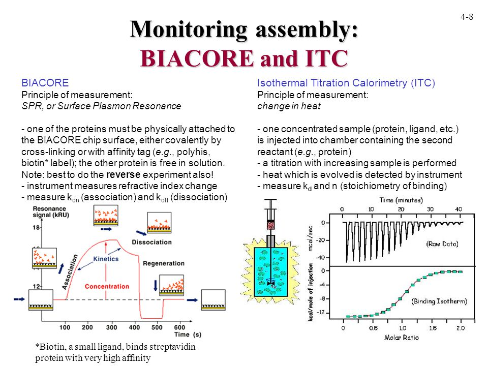 Monitoring assembly: BIACORE and ITC Isothermal Titration Calorimetry (ITC) Principle of measurement: change in heat - one concentrated sample (protein, ligand, etc.) is injected into chamber containing the second reactant (e.g., protein) - a titration with increasing sample is performed - heat which is evolved is detected by instrument - measure k d and n (stoichiometry of binding) BIACORE Principle of measurement: SPR, or Surface Plasmon Resonance - one of the proteins must be physically attached to the BIACORE chip surface, either covalently by cross-linking or with affinity tag (e.g., polyhis, biotin* label); the other protein is free in solution.
