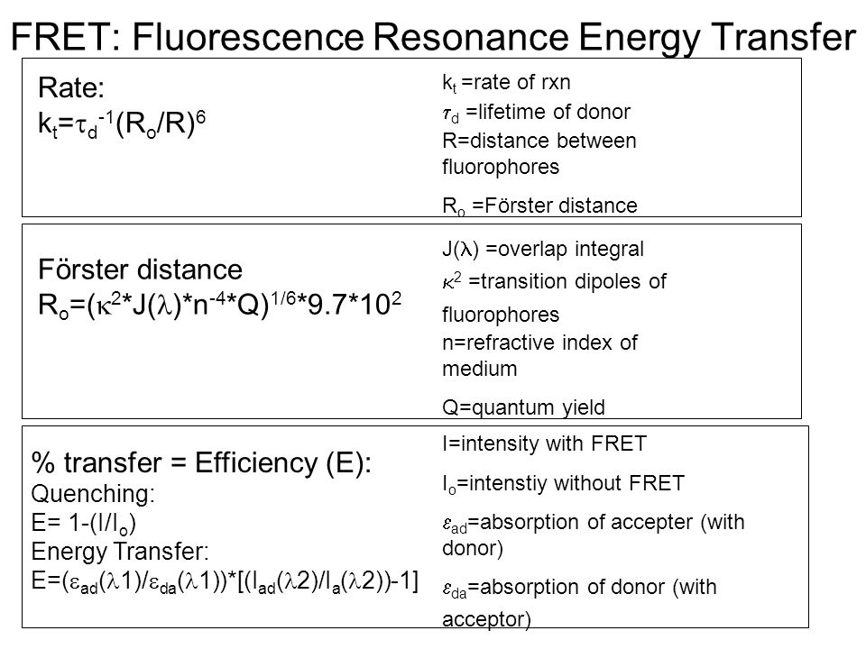 FRET: Fluorescence Resonance Energy Transfer Quenching: Energy Transfer: Rate: k t =  d -1 (R o /R) 6 k t =rate of rxn  d =lifetime of donor R=dista
