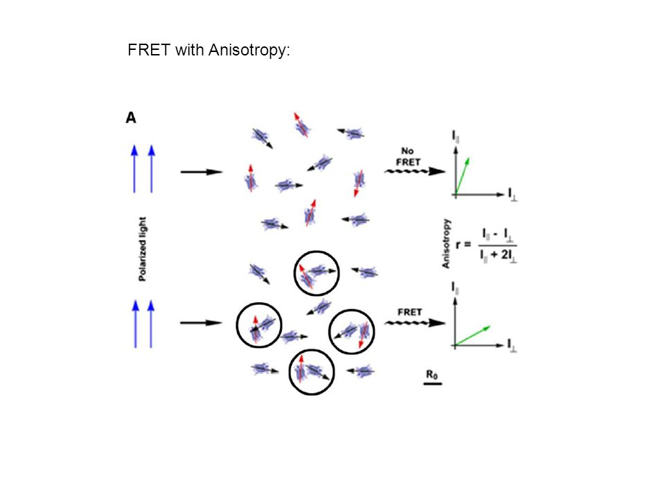 FRET with Anisotropy: