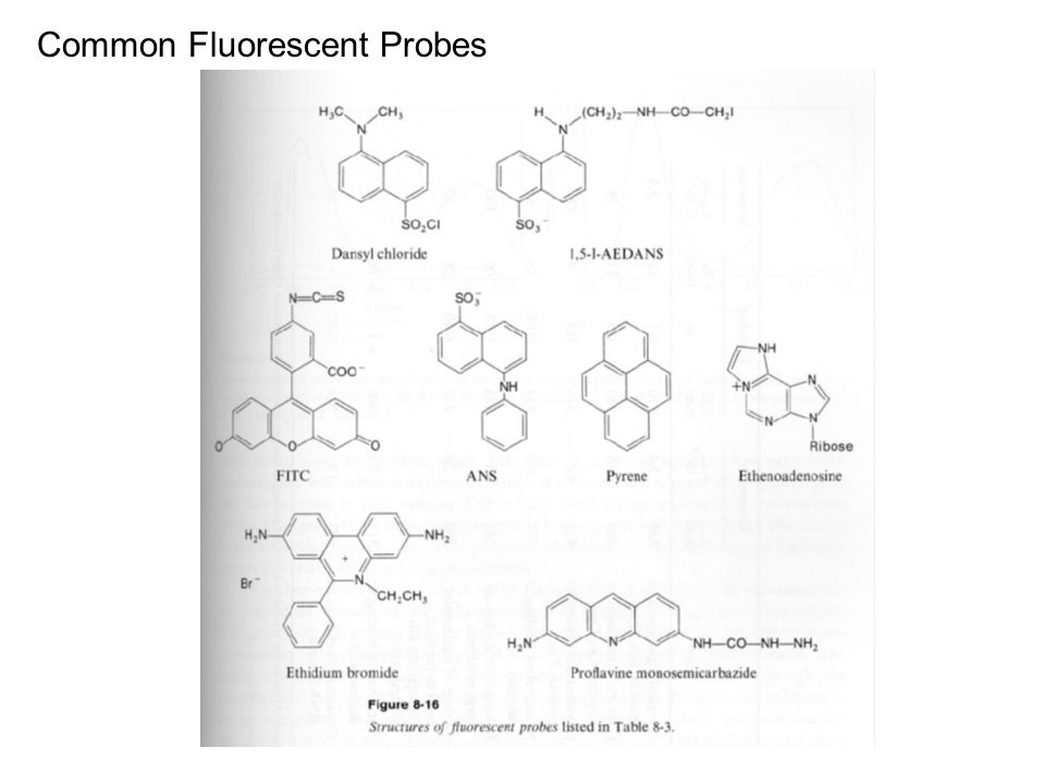 Common Fluorescent Probes