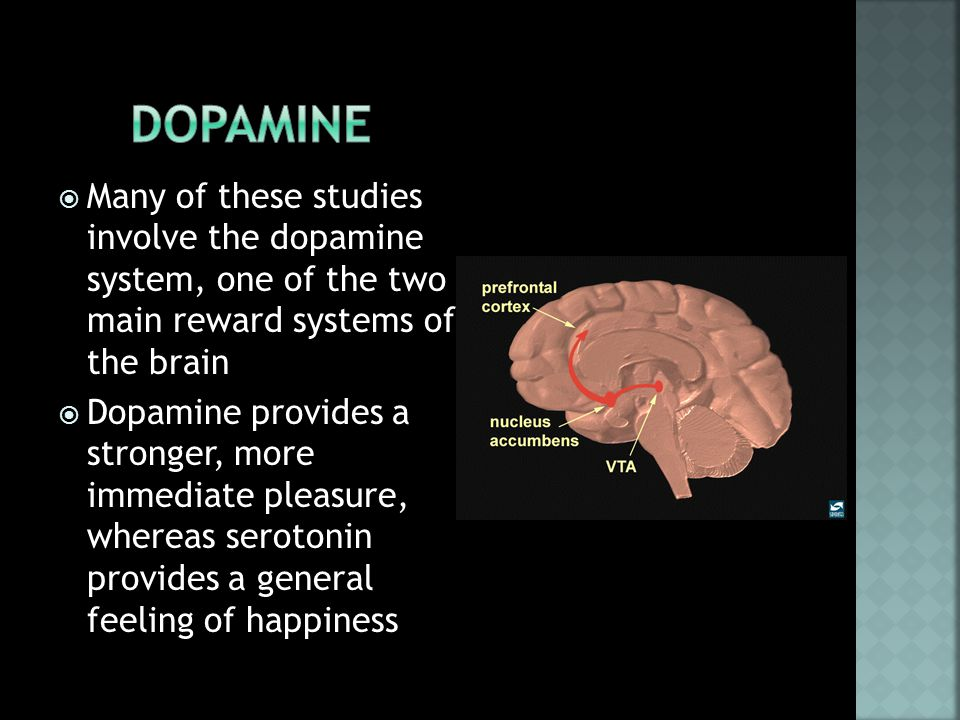  Many of these studies involve the dopamine system, one of the two main reward systems of the brain  Dopamine provides a stronger, more immediate pleasure, whereas serotonin provides a general feeling of happiness
