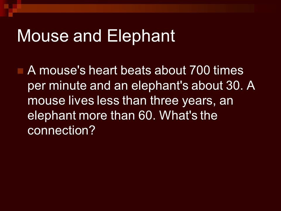 Is there a relationship between size of the animal and its heart rate.