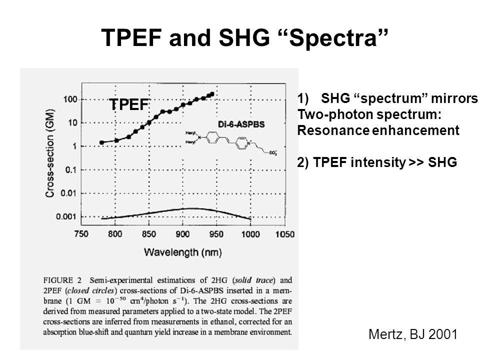 """Mertz, BJ 2001 1)SHG """"spectrum"""" mirrors Two-photon spectrum: Resonance enhancement 2) TPEF intensity >> SHG TPEF TPEF and SHG """"Spectra"""""""