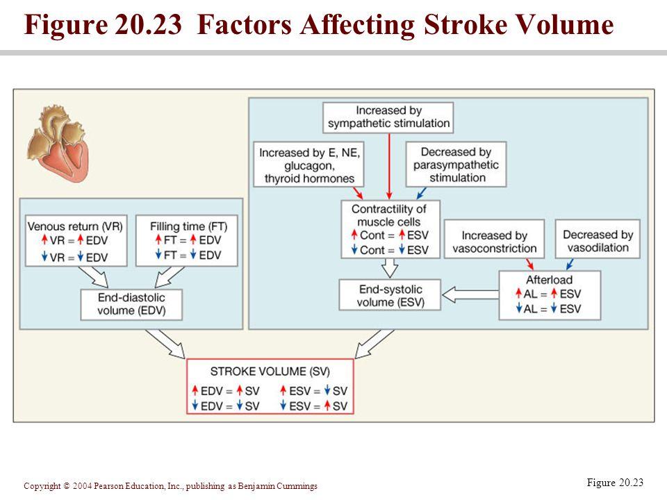 Copyright © 2004 Pearson Education, Inc., publishing as Benjamin Cummings Figure 20.23 Factors Affecting Stroke Volume Figure 20.23