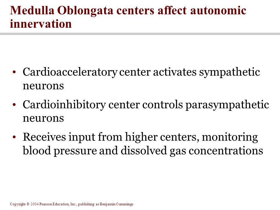 Copyright © 2004 Pearson Education, Inc., publishing as Benjamin Cummings Medulla Oblongata centers affect autonomic innervation Cardioacceleratory ce