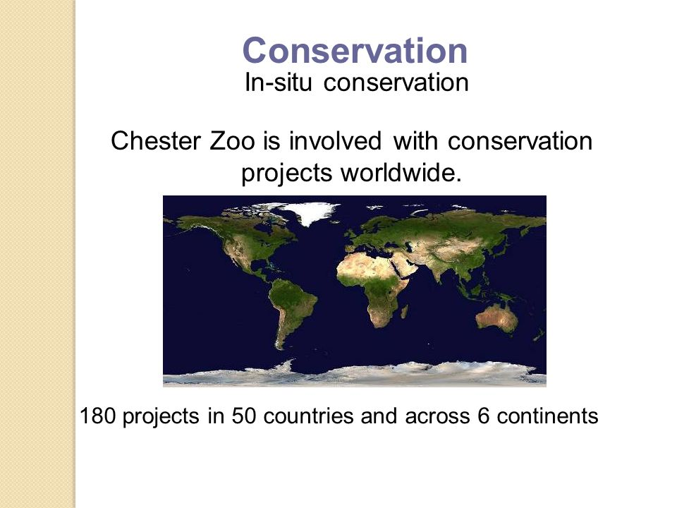 In-situ conservation Chester Zoo is involved with conservation projects worldwide.