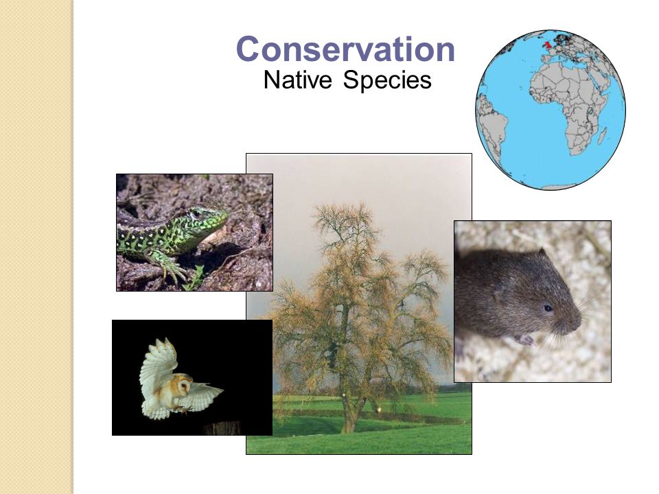 Native Species Conservation