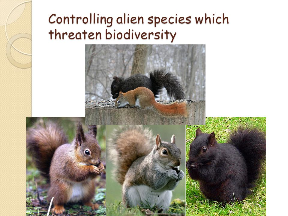 Controlling alien species which threaten biodiversity