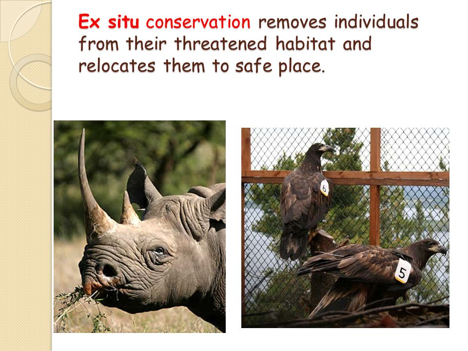 Ex situ conservation removes individuals from their threatened habitat and relocates them to safe place.
