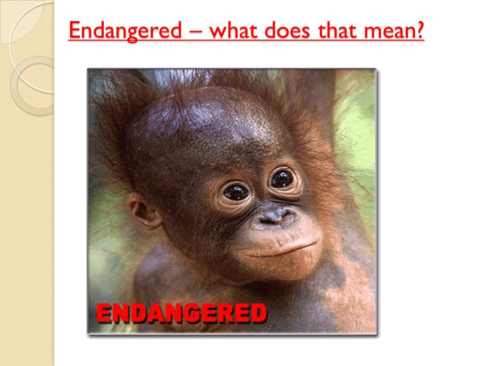 Endangered – what does that mean