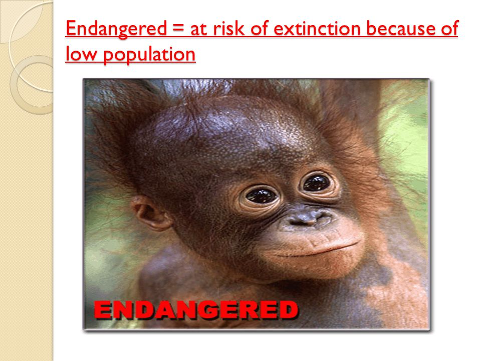 Endangered = at risk of extinction because of low population