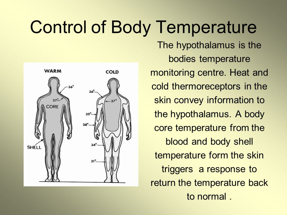 Control of Body Temperature The hypothalamus is the bodies temperature monitoring centre. Heat and cold thermoreceptors in the skin convey information