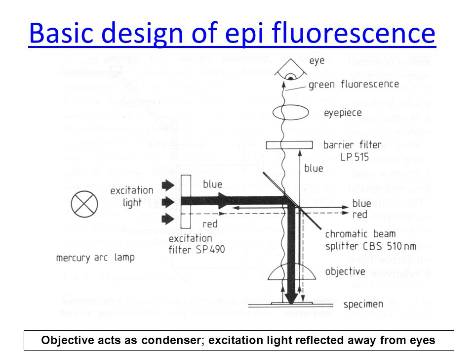 Basic design of epi fluorescence Objective acts as condenser; excitation light reflected away from eyes