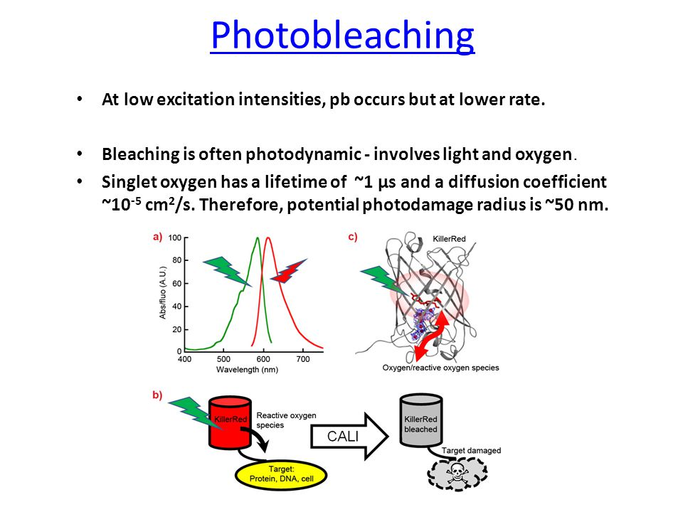 Photobleaching At low excitation intensities, pb occurs but at lower rate.