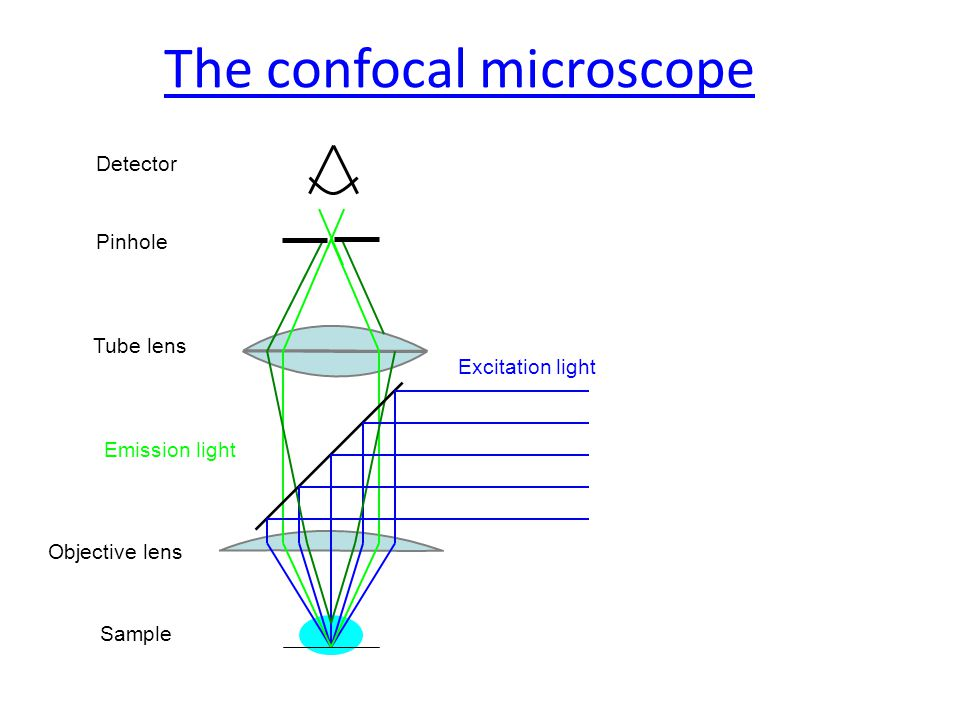 The confocal microscope Sample Objective lens Excitation light Tube lens Emission light Pinhole Detector