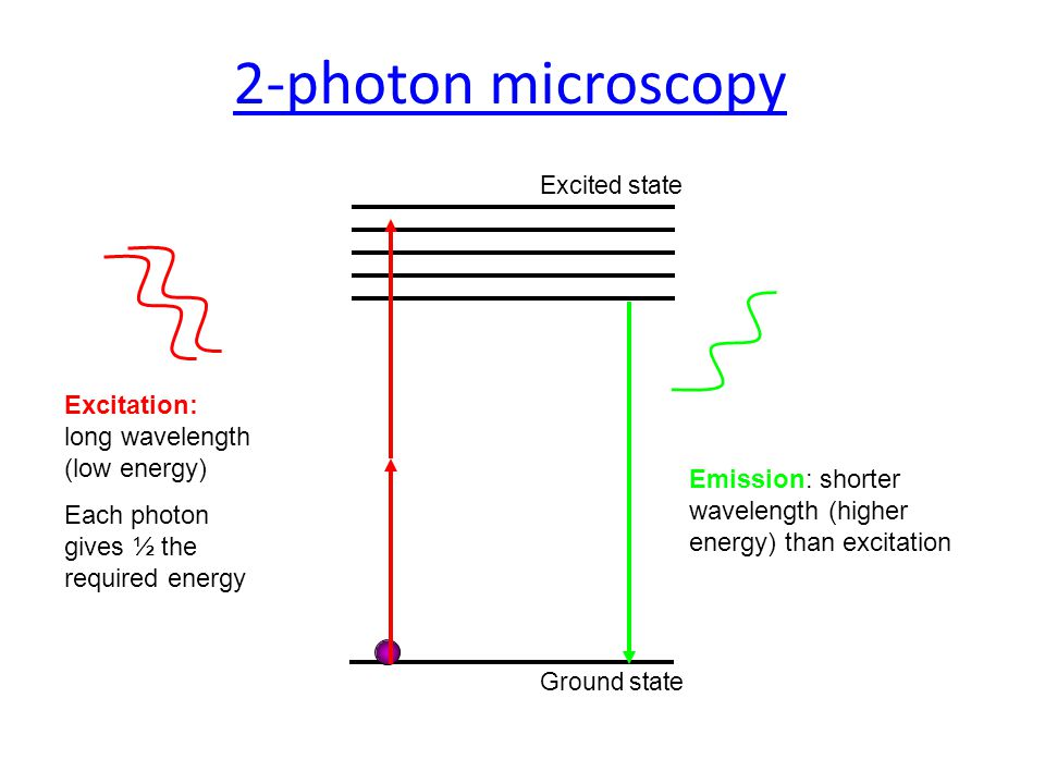 Excited state Ground state 2-photon microscopy Excitation: long wavelength (low energy) Each photon gives ½ the required energy Emission: shorter wavelength (higher energy) than excitation