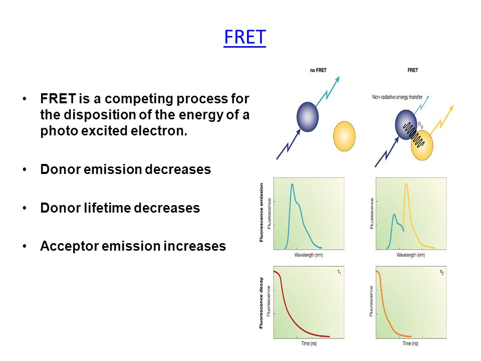 FRET is a competing process for the disposition of the energy of a photo excited electron.