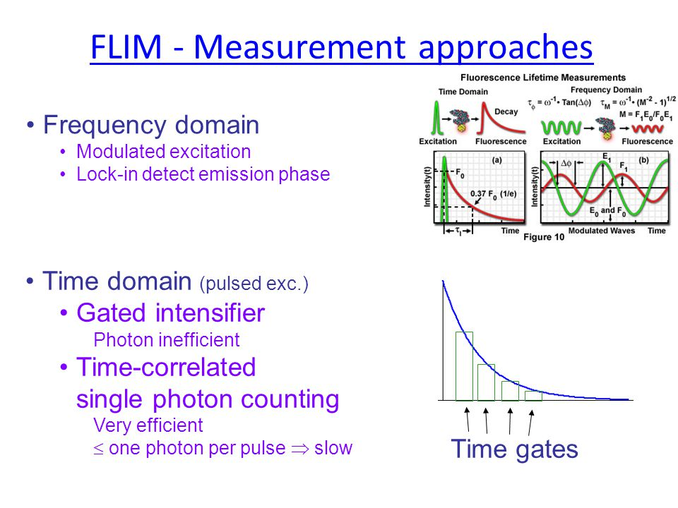 FLIM - Measurement approaches Frequency domain Modulated excitation Lock-in detect emission phase Time domain (pulsed exc.) Gated intensifier Photon inefficient Time-correlated single photon counting Very efficient  one photon per pulse  slow Time gates