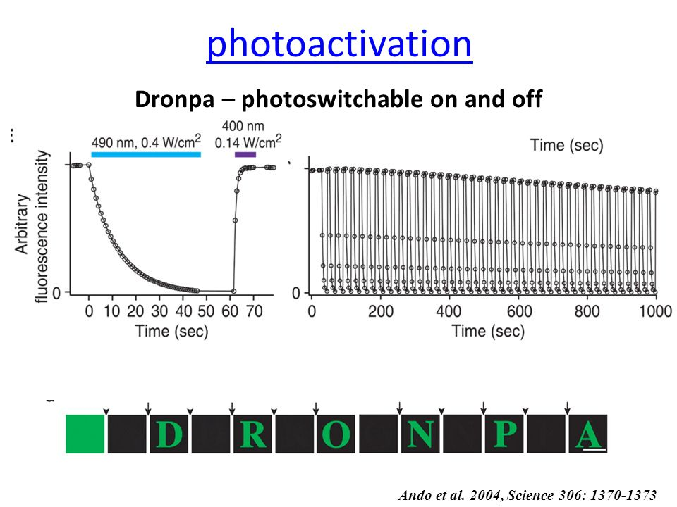 Dronpa – photoswitchable on and off Ando et al. 2004, Science 306: 1370-1373 photoactivation