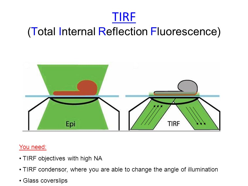 TIRF (Total Internal Reflection Fluorescence) You need: TIRF objectives with high NA TIRF condensor, where you are able to change the angle of illumination Glass coverslips