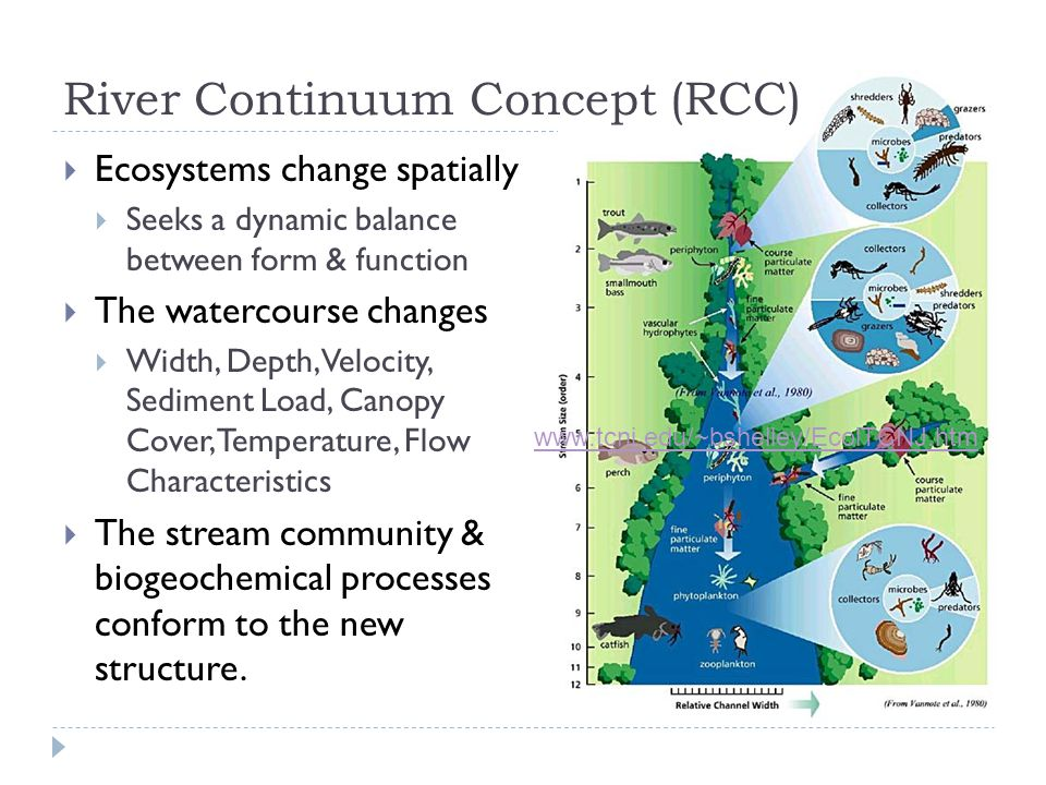  Ecosystems change spatially  Seeks a dynamic balance between form & function  The watercourse changes  Width, Depth, Velocity, Sediment Load, Can