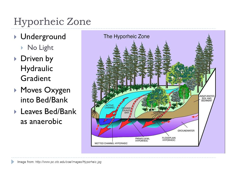 Hyporheic Zone  Underground  No Light  Driven by Hydraulic Gradient  Moves Oxygen into Bed/Bank  Leaves Bed/Bank as anaerobic Image from: http://www.pc.ctc.edu/coe/images/Hyporheic.jpg