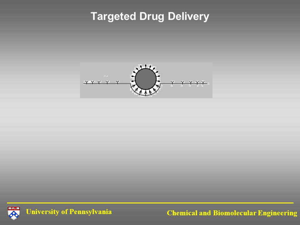 University of Pennsylvania Chemical and Biomolecular Engineering Targeted Drug Delivery
