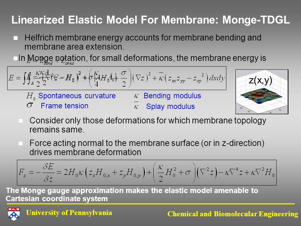 University of Pennsylvania Chemical and Biomolecular Engineering Linearized Elastic Model For Membrane: Monge-TDGL Helfrich membrane energy accounts for membrane bending and membrane area extension.