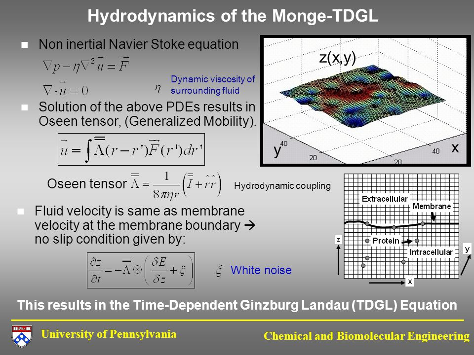 University of Pennsylvania Chemical and Biomolecular Engineering Hydrodynamics of the Monge-TDGL Non inertial Navier Stoke equation Dynamic viscosity of surrounding fluid Solution of the above PDEs results in Oseen tensor, (Generalized Mobility).