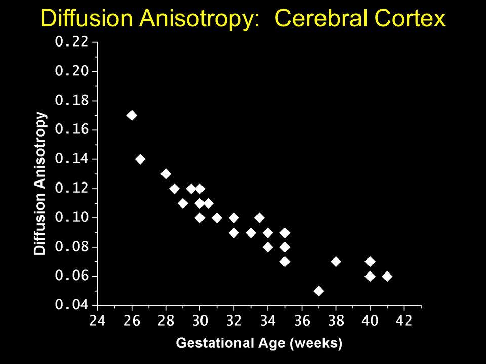 Diffusion Anisotropy: Cerebral Cortex