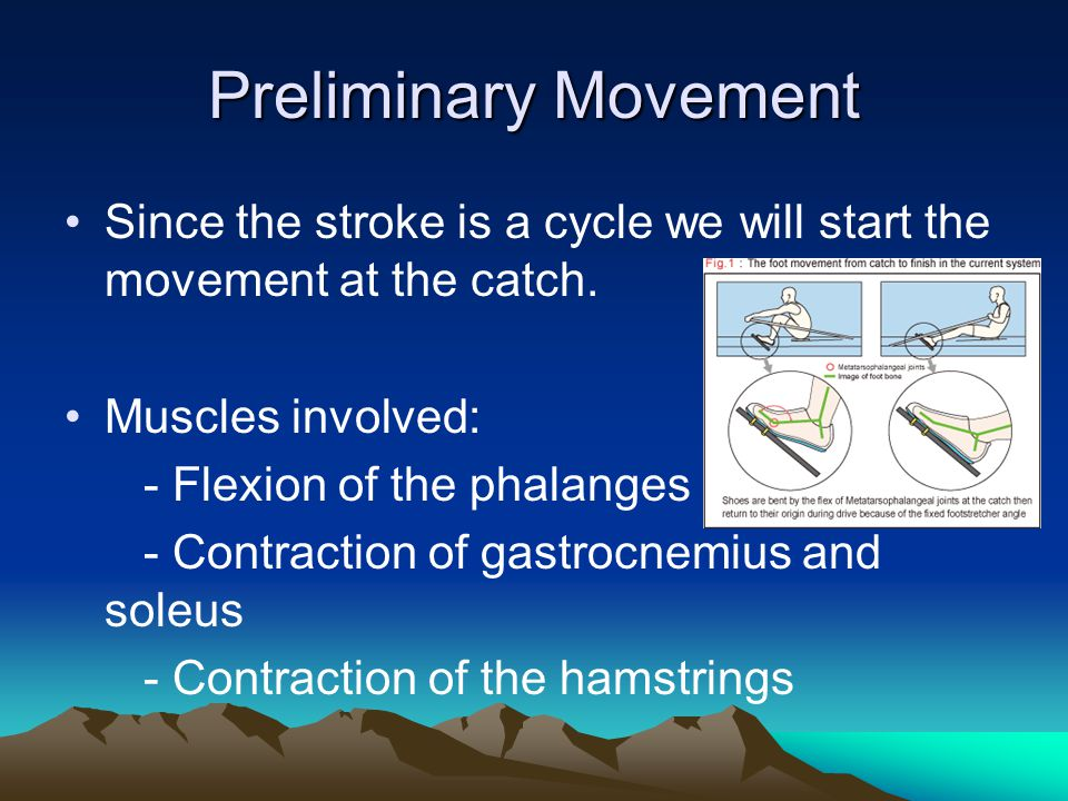 Preliminary Movement Since the stroke is a cycle we will start the movement at the catch.