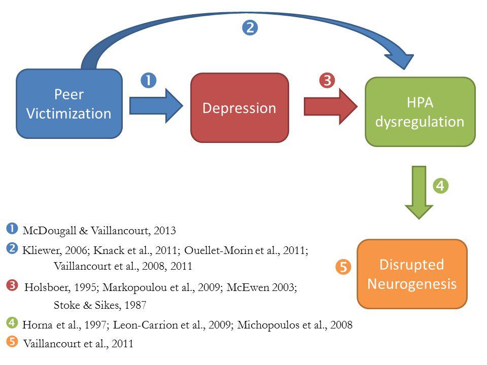 Peer Victimization Depression HPA dysregulation Disrupted Neurogenesis  McDougall & Vaillancourt, 2013  Kliewer, 2006; Knack et al., 2011; Ouellet-Morin et al., 2011; Vaillancourt et al., 2008, 2011  Holsboer, 1995; Markopoulou et al., 2009; McEwen 2003; Stoke & Sikes, 1987  Horna et al., 1997; Leon-Carrion et al., 2009; Michopoulos et al., 2008  Vaillancourt et al., 2011     