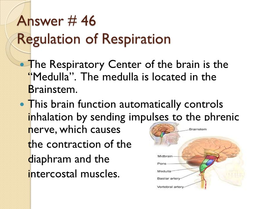 Answer # 46 Regulation of Respiration The Respiratory Center of the brain is the Medulla .
