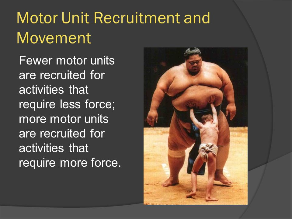 Motor Unit Recruitment and Movement Fewer motor units are recruited for activities that require less force; more motor units are recruited for activit